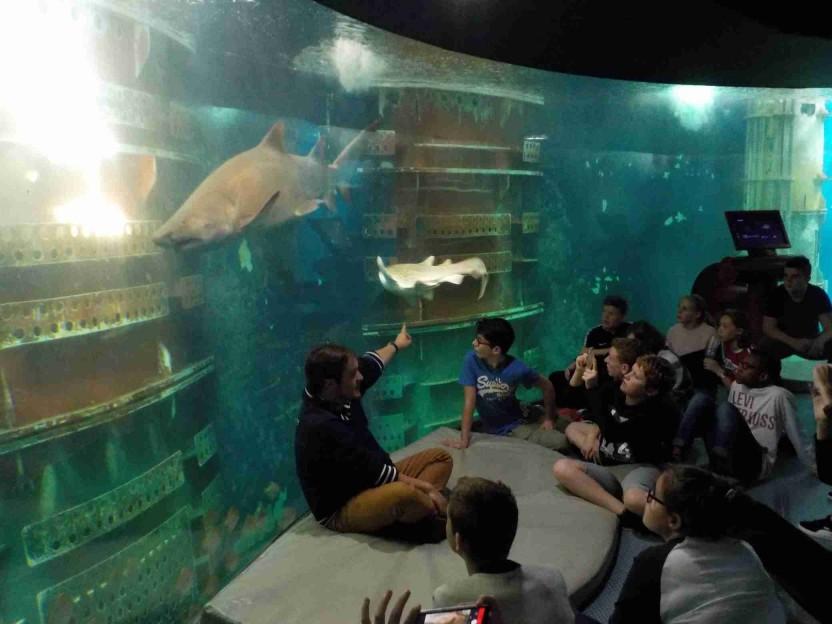 Sortie des 4èmes au Barrage de la Rance et Grand Aquarium de St Malo